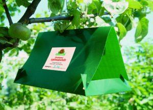 Lockstofffalle gegen Apfelwickler - Neudorff GmbH KG