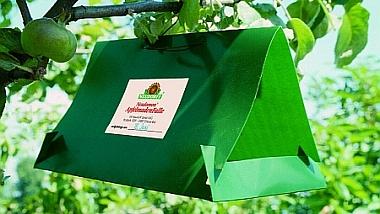 Pflanzenschutz Obstbäume, Tübingen - Apfelwicklerfalle