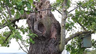 Pflanzenschutz für Obstbäume. Baumpflege Stohp in Tübingen.