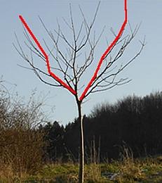 Kostenloser Online Kurs Baumschnitt: Obstbaum schneiden lernen