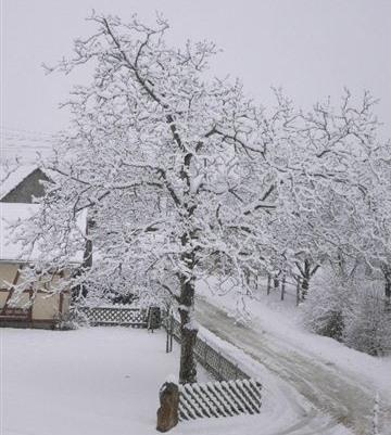 einen Walnussbaum nicht im Winter schneiden