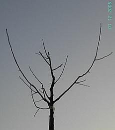 online baumschnittkurs tübingen - das gerüst des obstbaums