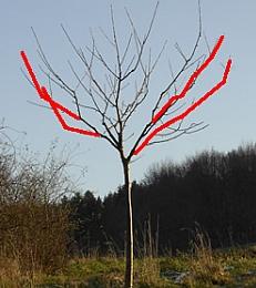 Online Kurs Baumschnitt: Obstbaum schneiden lernen