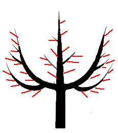 Kostenloser Online Kurs Baumschnitt: Obstbaum schneiden lernen - das Fruchtholz