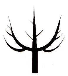 Online Kurs Baumschnitt: Obstbaum selbst schneiden lernen