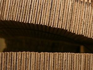 Wellpappe-Fanggürtel als Schutz vor dem Apfelwickler