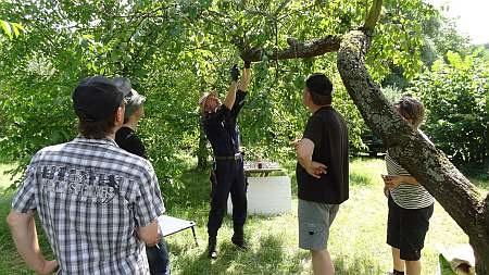 Ganz wichtig: die richtige Schnittführung. Sie verringert das Risiko etwaiger Arbeitsunfällen und schützt zudem den Baum vor unnötigen Schäden.