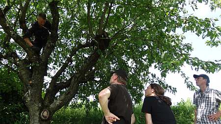 Baumschnitt Kurs Öschberg Palmer in der Kleingruppe - Baumpflege Tübingen