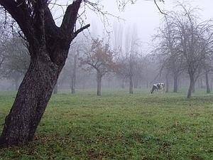 Baumpflege-Kalender November