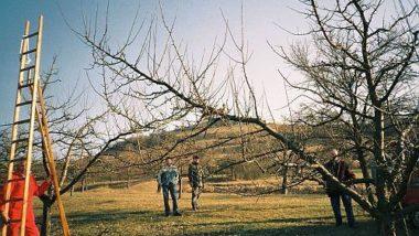 Obstbaumschnitt mit Helmut Palmer