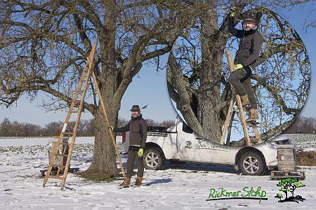 dreibeinige Leiter für den Obstbaumschnitt
