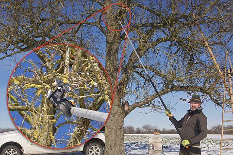 Tipps für den Obstbaumschnitt: die besten Astscheren und Sägen