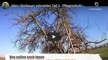 Video Baumschnitt Palmerschnitt