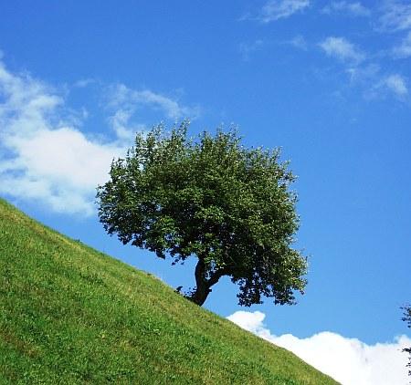 Apfelbaum und Kirschbaum vor Schädlingen schützen